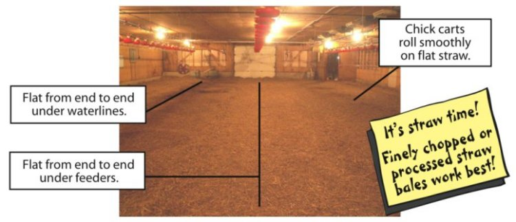 Image of a barn, showing the benefits of the Rotary Fork in a poultry barn.